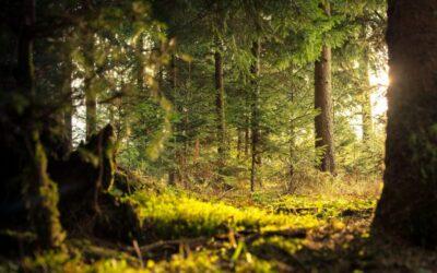 Forest bathing – cea mai rapidă, durabilă si profundă forma de re-energizare